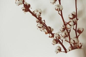 cotton8