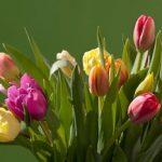 貰った花束の元気がない花を復活させて長持ちさせる方法♪
