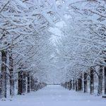 日本の冬はなぜ乾燥するのか雪国は?ニュースの乾燥注意報って?
