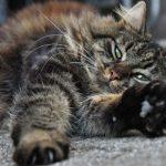 猫の冬あるあるコタツホットカーペットで乾燥脱水低温やけど怪我対策