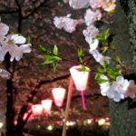 王子動物園夜桜通り抜け2018の日程と営業時間と所要時間